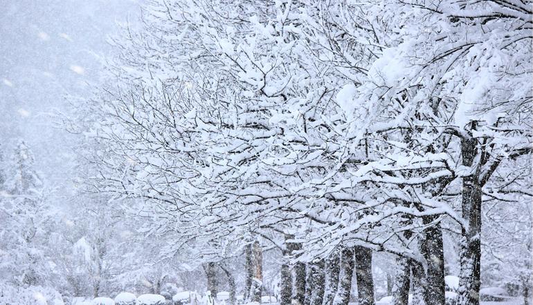 haiku-winter